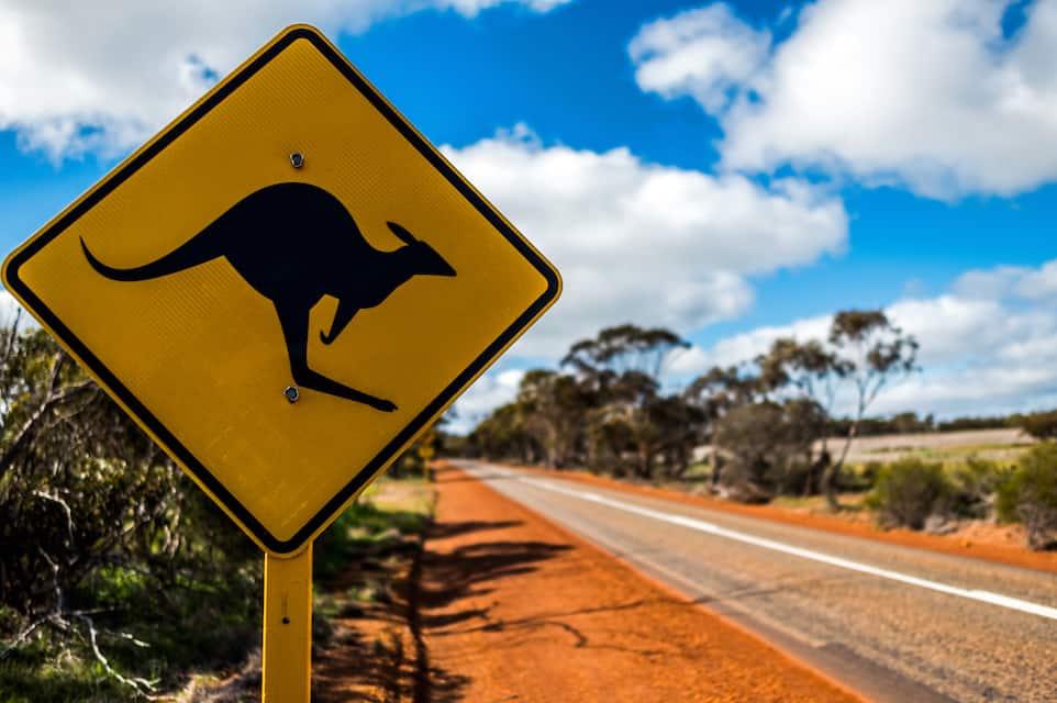Tesla Autopilot Faces A Kangaroo Problem Down Under